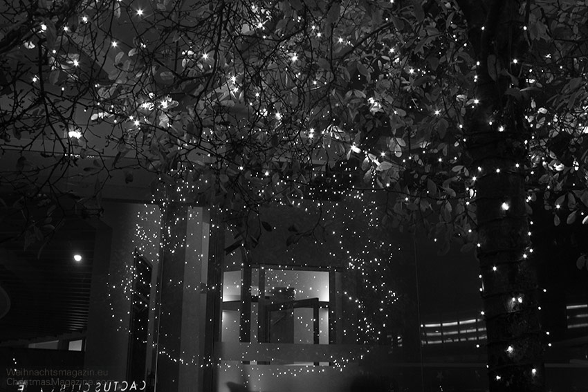 Under the lit tree