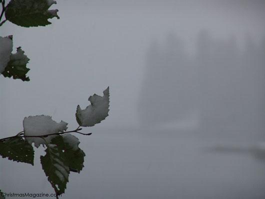 winter in Stanley Park, Vancouver, Canada, British Columbia